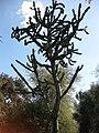 Gardenology.org-IMG 2721 hunt0903.jpg