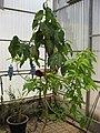 Gardenology.org-IMG 7821 qsbg11mar.jpg