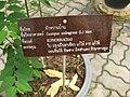 Gardenology.org-IMG 8040 qsbg11mar.jpg