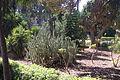 Gardens of the San Anton Palace-6.jpg
