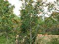 Garraf Naturpark 3.jpg