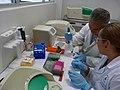 Genetics Laboratory UMAR Puerto Escondido.jpg