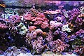 Genoa - Aquarium 14.jpg