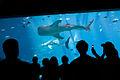 Georgia Aquarium (4663504692).jpg