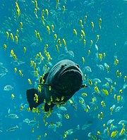 Fish/