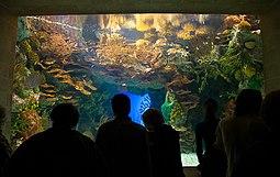 Tanque de peces tropicales