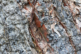 Gesteine am Ufer der Urft im Nationalpark Eifel-3529.jpg