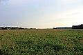 Gfp-indiana-prophetstown-state-park-grassy-prairie.jpg