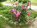 Giardino di Ninfa 110.jpg