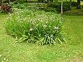 Giardino di Ninfa 139.jpg