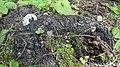 Gilova bosko 03-07-2020 (01) 13.jpg