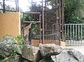 Giraffe in Zoo Negara Malaysia (18).jpg