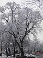 Glogow, Poland - panoramio (43).jpg