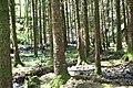 Gougane Barra Forest Park - geograph.org.uk - 507524.jpg