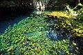Grand Cenote 20101006.jpg