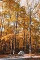 Great Smoky Mountains, United States (Unsplash eJ OyOeGFHI).jpg