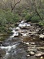 Great Smoky Mountains April 2014 4.JPG