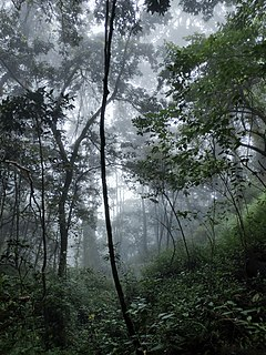 Sustainable forest management