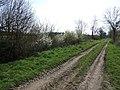 Green Lane (Track) - geograph.org.uk - 397205.jpg