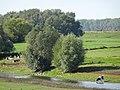 Griethauser Altrhein PM19-06.jpg
