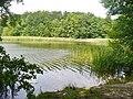 Grosser Lienewitzsee - Ufer (Great Lienewitz Lake - Bank) - geo.hlipp.de - 39309.jpg