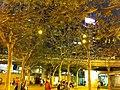 HK Victoria Park night trees 5-Feb-2013.JPG