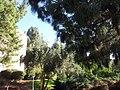 HUJI VIEW 20120911 163841.jpg