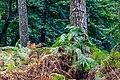 """Haltern am See, Hohe Mark, Naturschutzgebiet """"Hohemarkenbusch"""" -- 2021 -- 6529.jpg"""