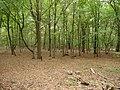 Hambach forest 25.jpg