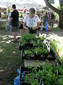 Harvest Fair - vegetable starts.jpg
