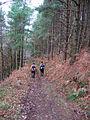 Heading to Hingles Wood - geograph.org.uk - 107182.jpg