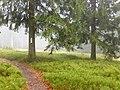 Heidelbeer-Wiese auf dem Predigtstuhl.jpg