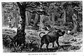 Henry M. Stanley; How I found Livingstone... Wellcome L0027698.jpg
