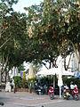 Herzl Street P1080787.JPG