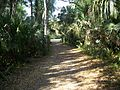 Highland Hammocks SP path02.jpg