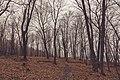 Hiking Trail at Frontenac State Park (32914112953).jpg