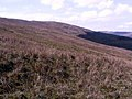 Hillside above Lledr Valley - geograph.org.uk - 165714.jpg