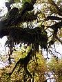 Hoh moss shadow cbubar NPS Photo (17276780136).jpg