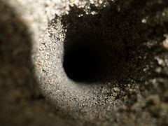 Hole in the sand created by red crabs.jpg