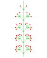 Homöokladische Thyrse (inflorescence).PNG