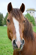 Horse portrait, Ukraine.jpg