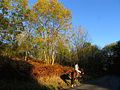 Horse riding through Winterbourne Wood - geograph.org.uk - 71360.jpg
