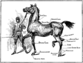 Horsemanship for Women 163.png