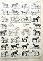 Horses (Nouveaau Larousse,c. 1900) DSCN2835.jpg