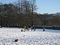 Horses in the Snow at Cottingley(2) - geograph.org.uk - 1636158.jpg