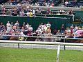 Horses racing tracks.jpg