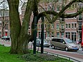 Huge city tree in Amsterdam-East, on the Zeeburgerdijk.jpg