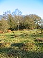 Hummocks Brockenhurst New Forest - geograph.org.uk - 697241.jpg