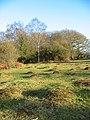 Hummocks Brockenhurst New Forest - geograph.org.uk - 697241.jpg