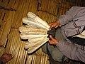 Hunting Hornbill Primates IMG 3386 04.jpg